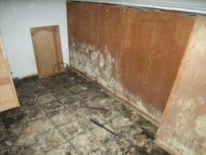 Mold in Room